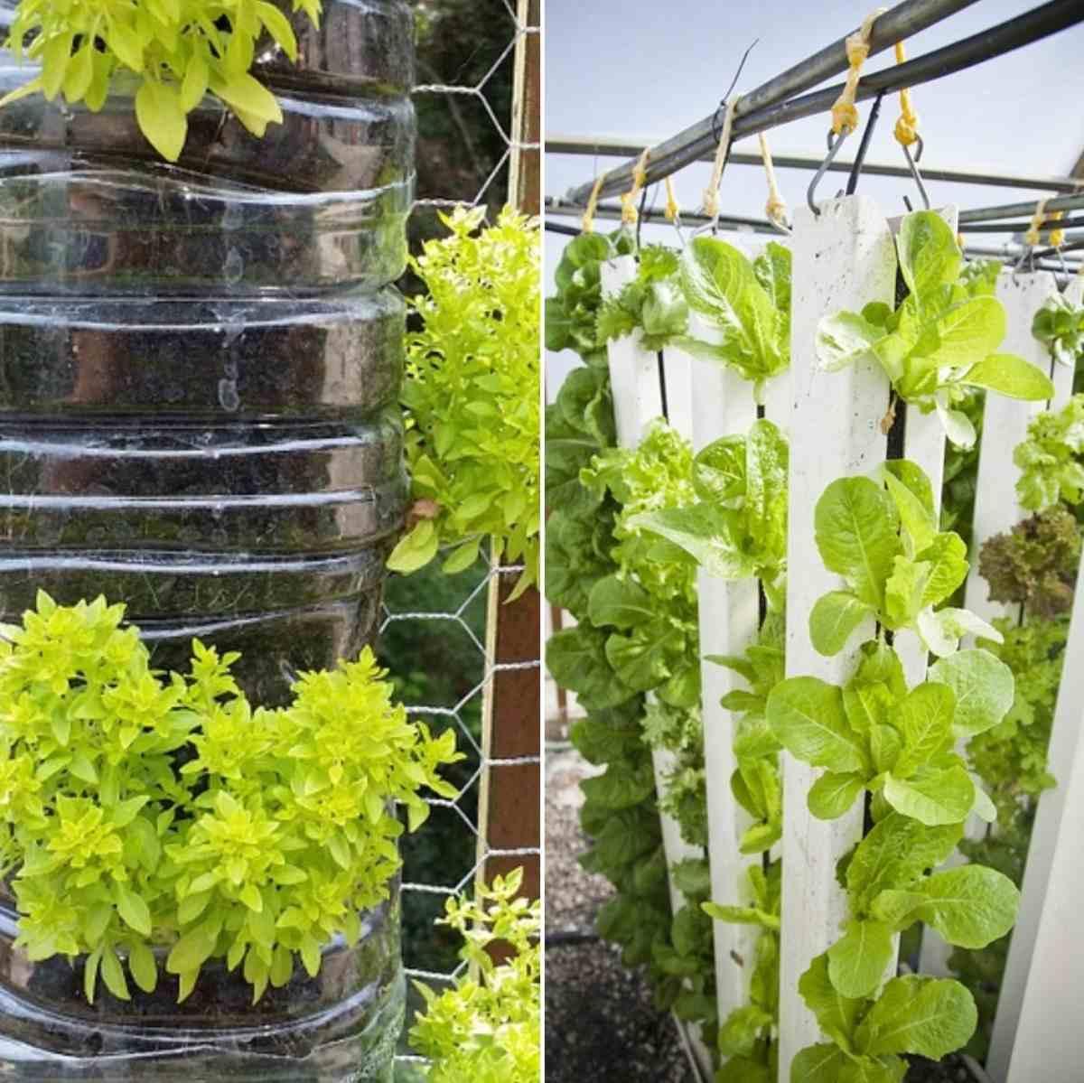 Vertical Garden Ideas.