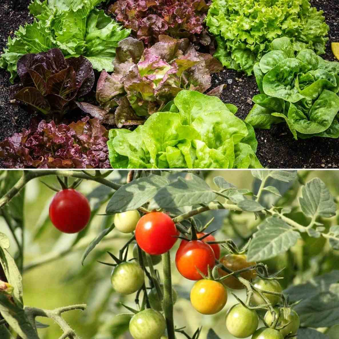 How to Build a Square Foot Garden.