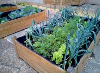 Growing Vegetable Layout.