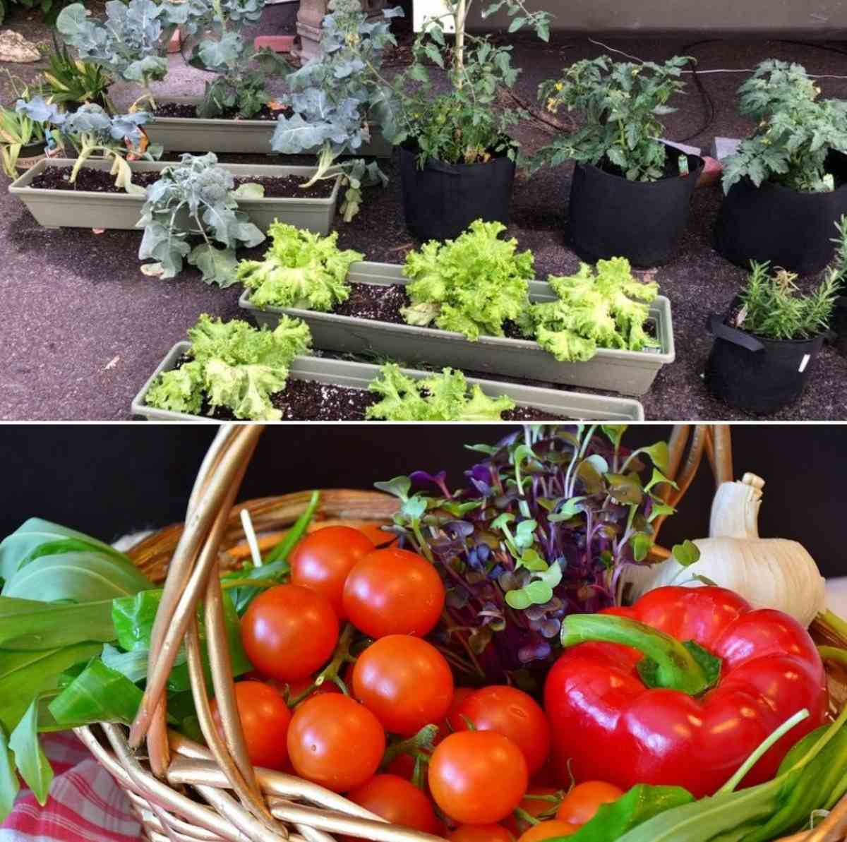 Vegetbale Gardening in Containers.