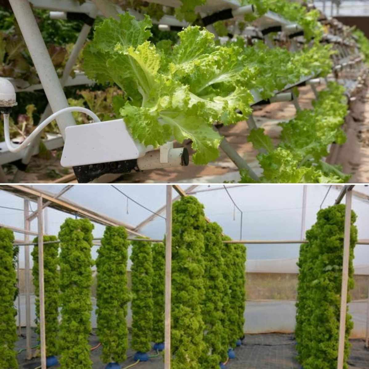 Hydroponic and Aeroponic System.