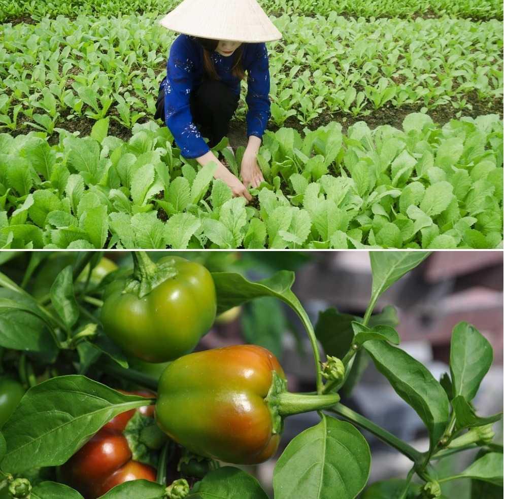 Vegetable Growing Season Chart,