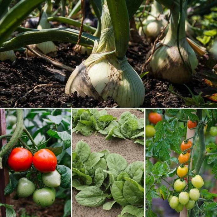 Vegetable Gardening Calendar In India A Full Guide Gardening Tips