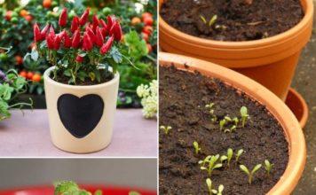 Organic Container Gardening.
