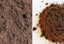 Peat Moss for Vegetable Gardening.