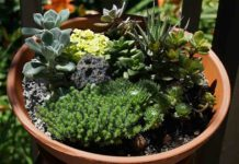 How to Create a Miniature Garden.