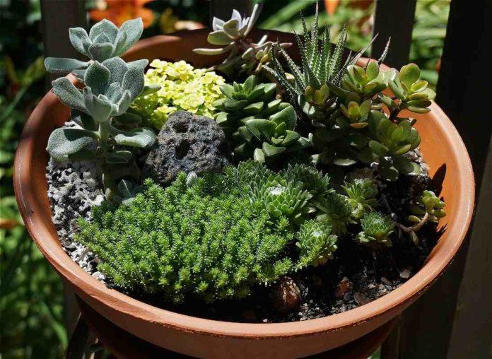 How to Create a Miniature Garden.