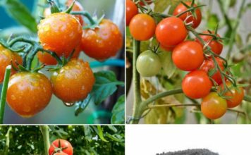 Organic Tomato Fertilizer.