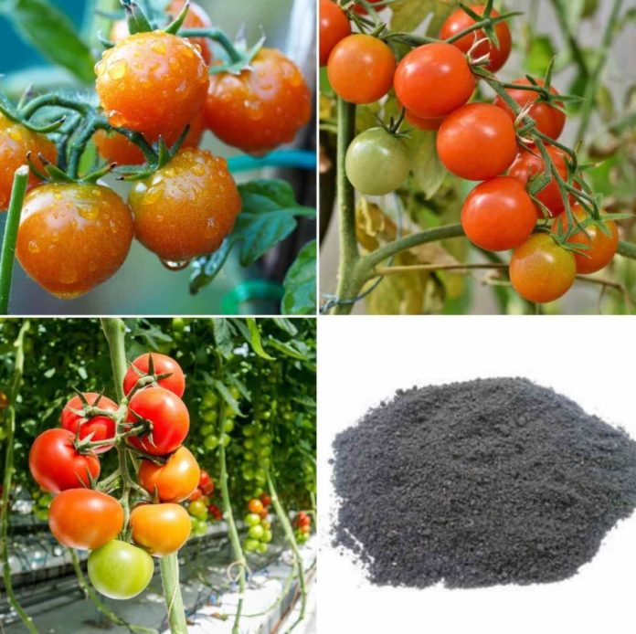 Organic Tomato Fertilizer.