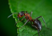 Getting Rid of Ants in Vegetable Garden.