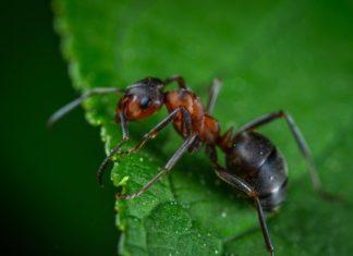 Getting Rid of Ants in Vegetable Garden.