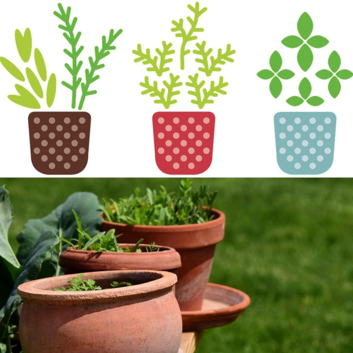 A Guide for Growing Herbs in Containers.