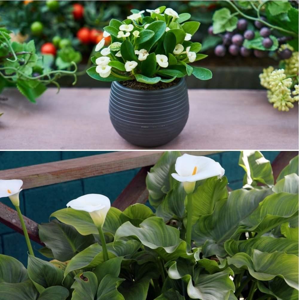 Important Tips to Improve Vastu with Plants.