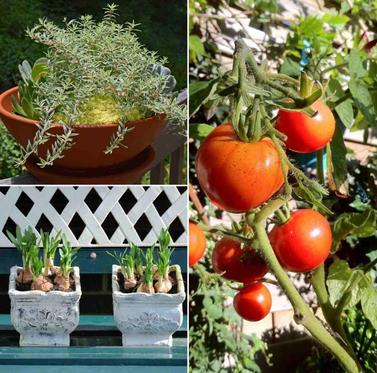 Advantages of Organic Container Gardening.