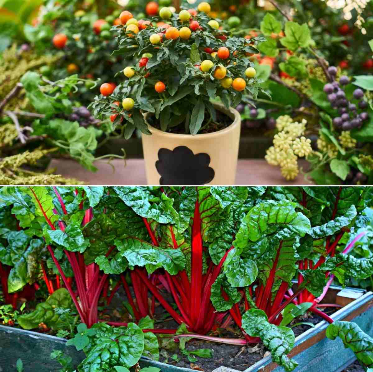 Small Space Vegetable Gardening in India  Gardening Tips