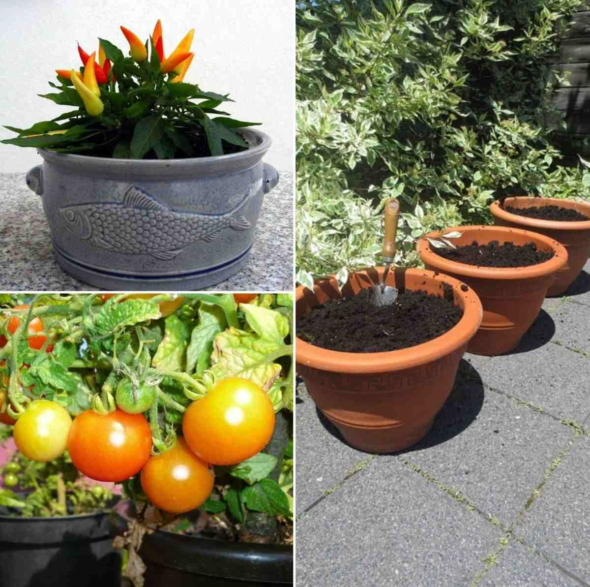 Containers for Vegetable Gardening.