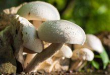 Growing Mushrooms Indoors.