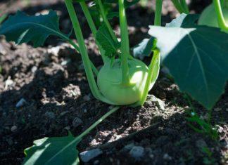 Small Vegetable Garden Ideas.