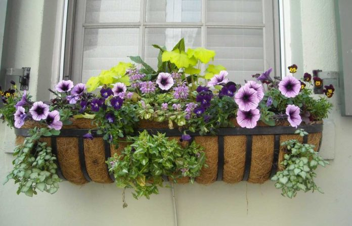 Gardening in Apartment without a Balcony.