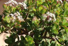 Low Maintenance Plants for Home Gardeners.