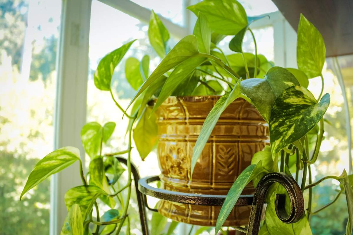 Guide to Indoor Foliage Plants.