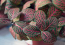 Growing Indoor Foliage Plants.