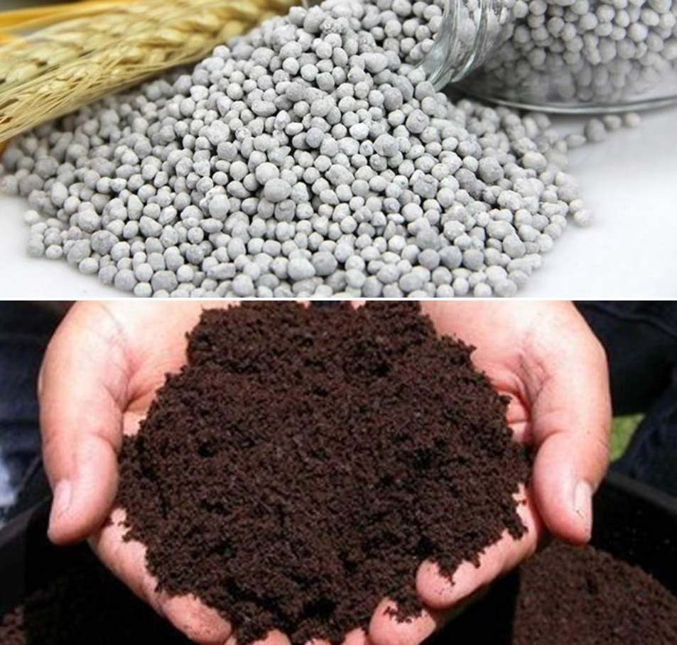 Vegetable Fertilizer Guide.