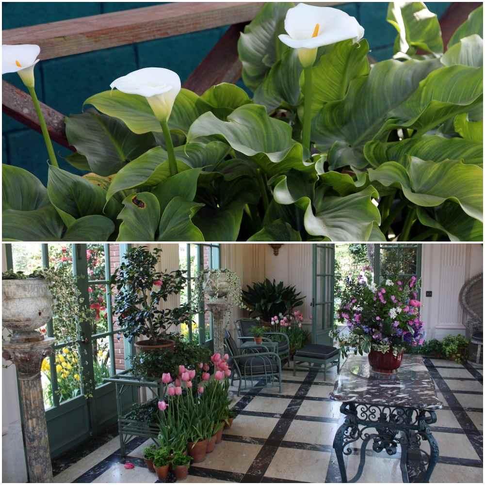 Benefits of Growing Indoor Plants.