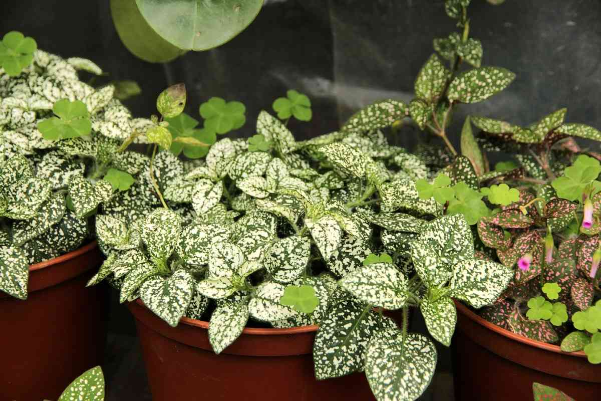 Requirements of Indoor Foliage Plants.