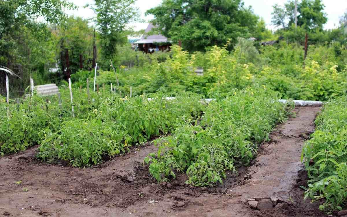 Vegetable Garden Tips for Beginners.