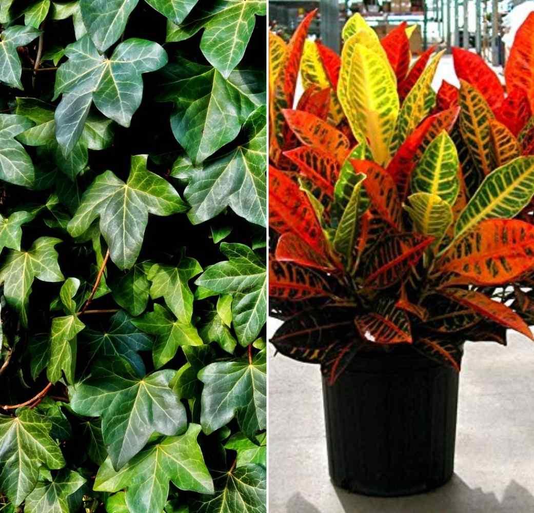 Best Temparature for Indoor Foliage Plants.
