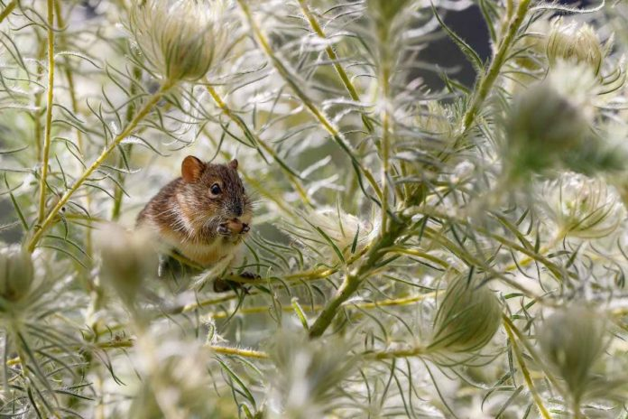 How to Protect your Garden from Rats