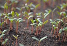 Seed Germination Process.