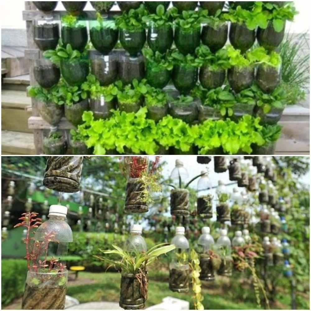 Growing Plants in Plastic Bottles.