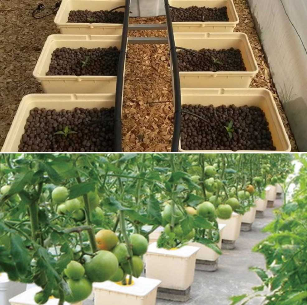 How to Build Dutch Bucket Hydroponic System.