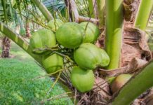 Coconut Coir Benefits for Gardening.