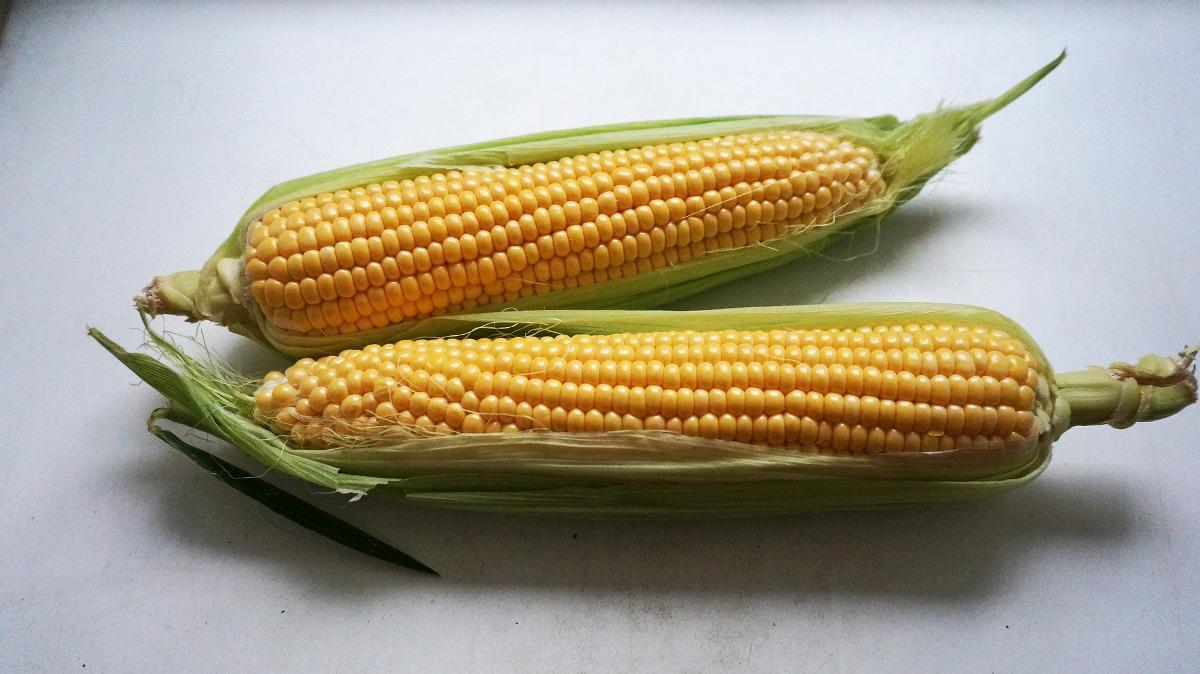 Fredhly Picked Corn.