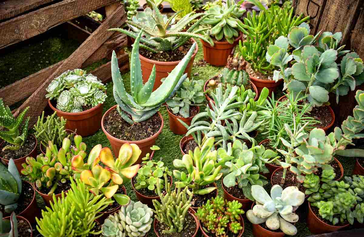 Growing Succulent Plants In Pots A Full Guide Gardening Tips