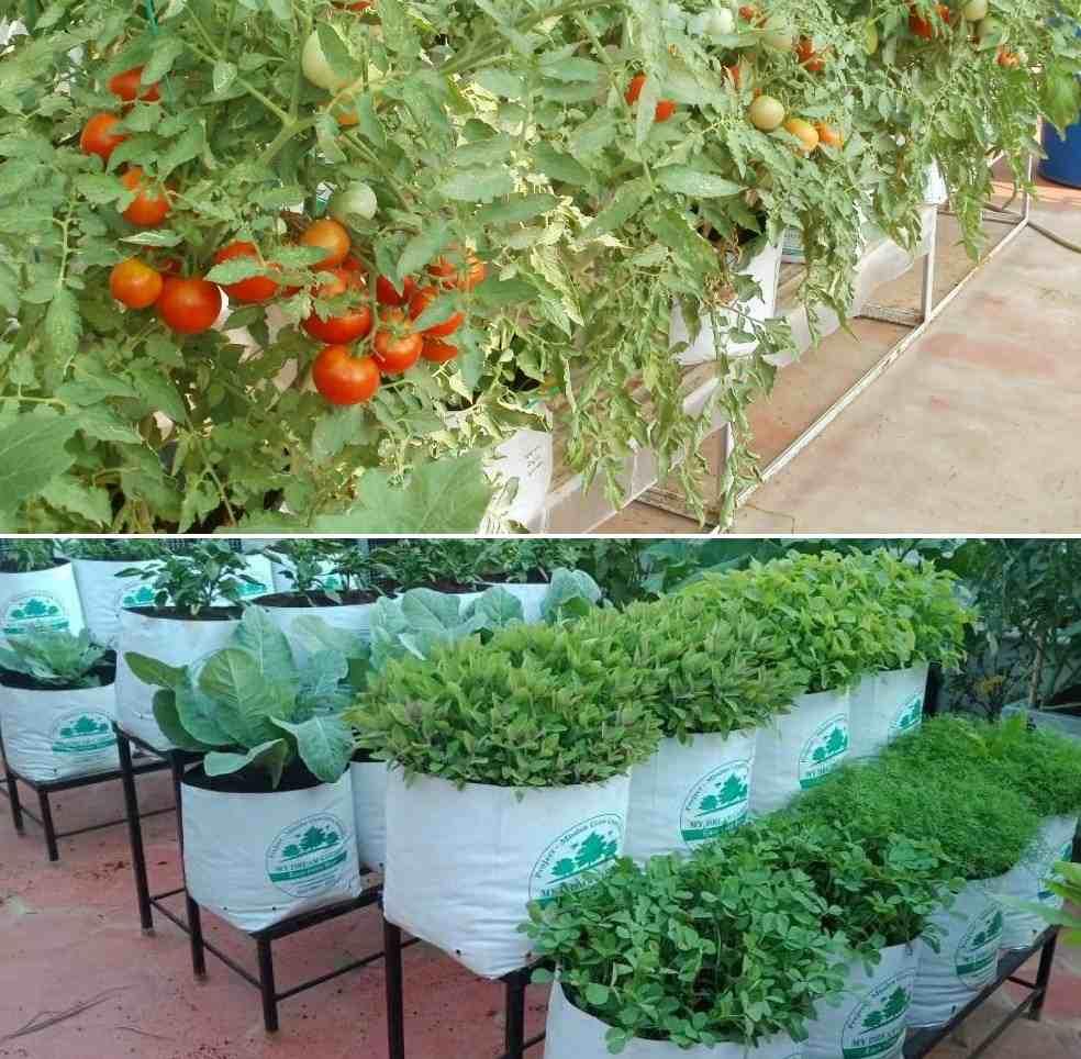 Rooftop Garden Terrace Garden Ideas For Home India Smart Trik