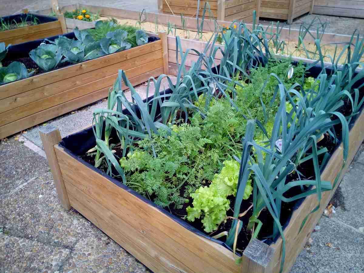 Terrace Vegetable Garden Ideas - For Beginners In India ...