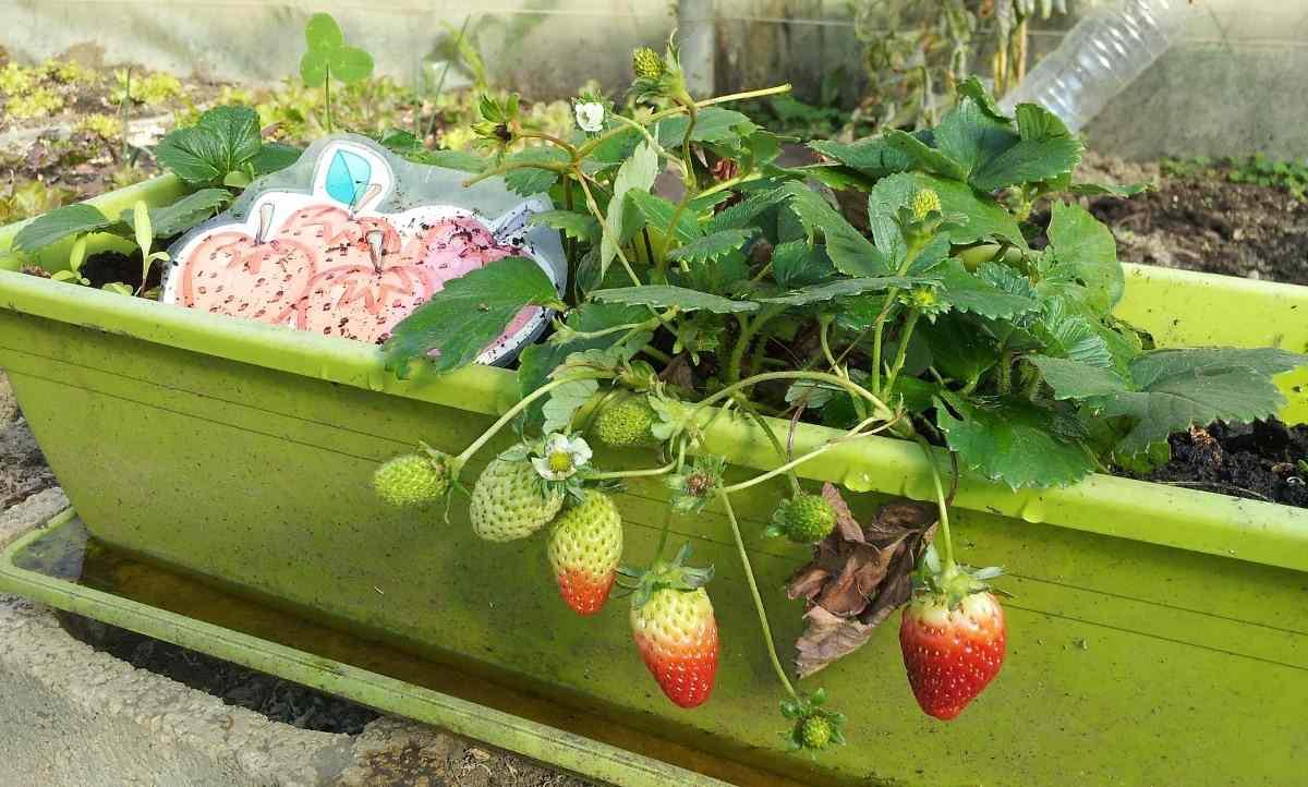 Starting Terrace Garden - In India For Beginners ...